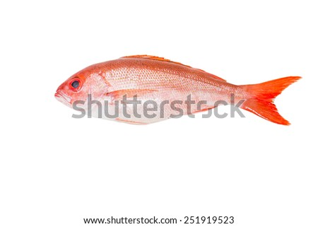 White snapper stock images royalty free images vectors for Types of red fish