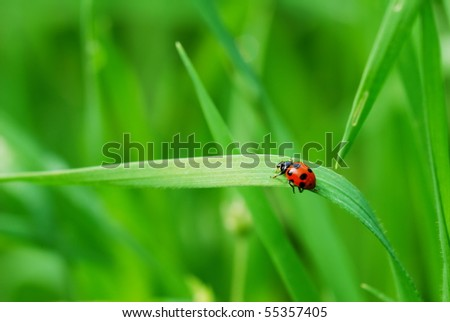 Red spotted Ladybird on green blade of grass (selective focus on ladybird back) - stock photo