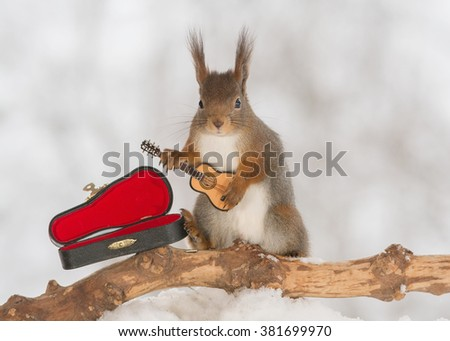 red squirrel in snow with guitar - stock photo