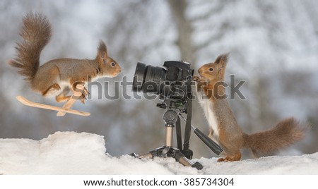 red squirrel in snow with skis and camera - stock photo