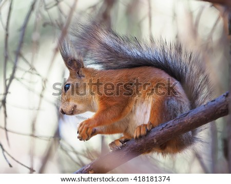 red squirrel on a feeding trough in the forest - stock photo