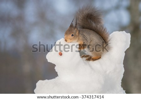 red squirrel on a snow animal - stock photo