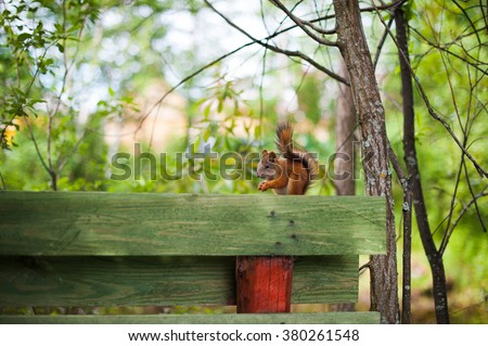 red squirrel sitting on a wooden fence - stock photo