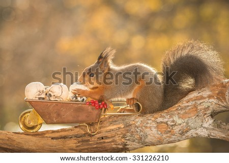 red squirrel standing on  a tree trunk with wheelbarrow and skulls - stock photo