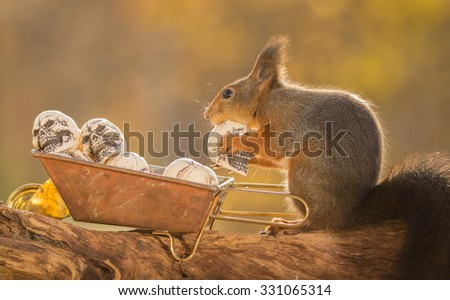 red squirrel standing on  a tree trunk with wheelbarrow with skulls - stock photo