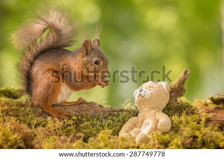 red squirrel standing on branch looking at a bear, dropping a seed