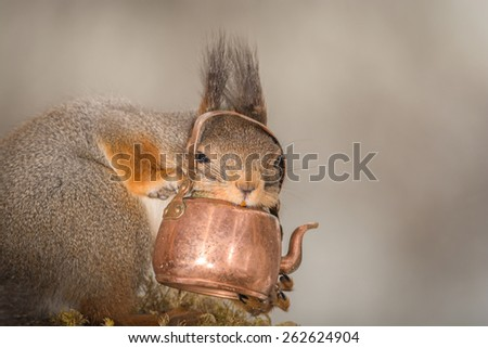 red squirrel with copper kettle in hands and looking through the handle in the camera