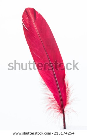 Red standing feather close up - stock photo