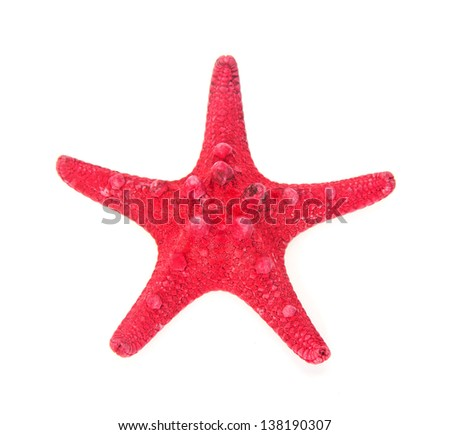 Red starfish close up isolated on white