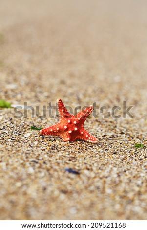 red starfish close up on the beach - stock photo