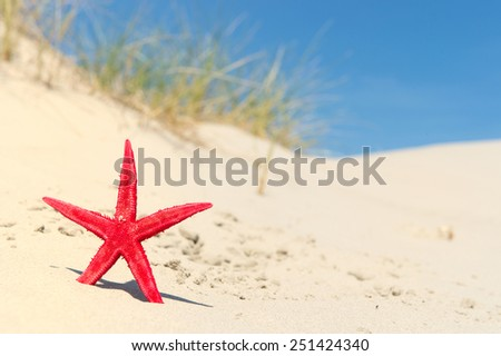 Red starfish in the dunes at the coast - stock photo