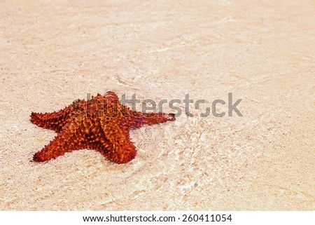 red starfish lying in the sand - stock photo
