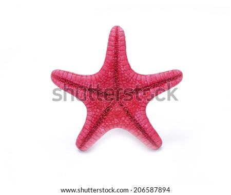 Red Starfish on a white background.