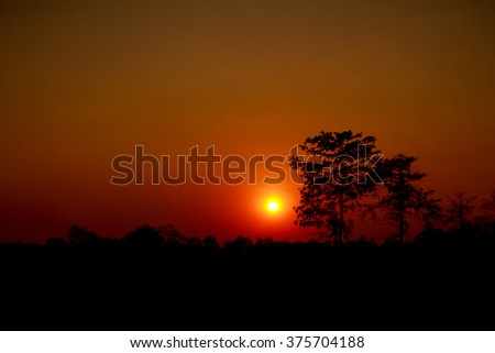 red sunset with a trees silhouette at sunset - stock photo