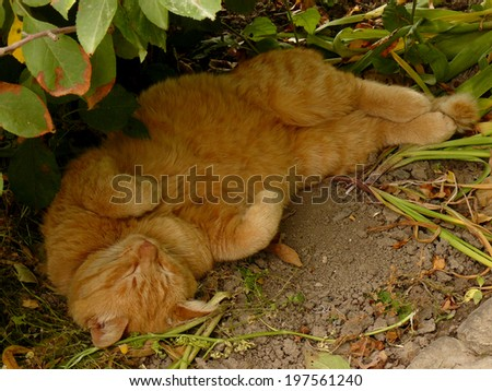 red tabby cat resting in tree shadow - stock photo