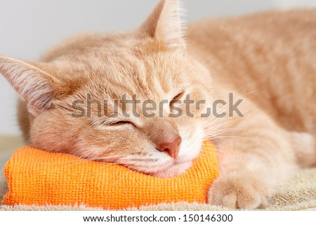 Red tabby cat sleeping isolated on white background. - stock photo
