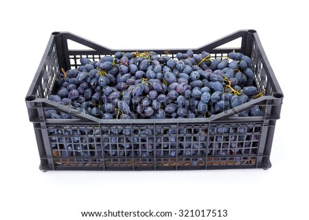 Red table grapes (Vitis) in plastic crate on white