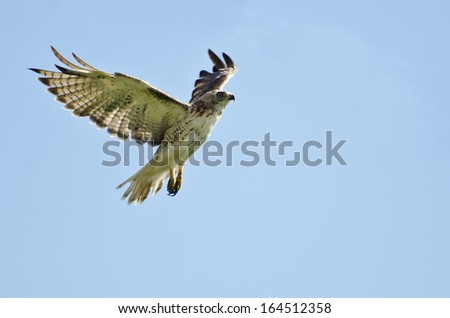 Red-Tailed Hawk Flying in a Cloudy Sky - stock photo