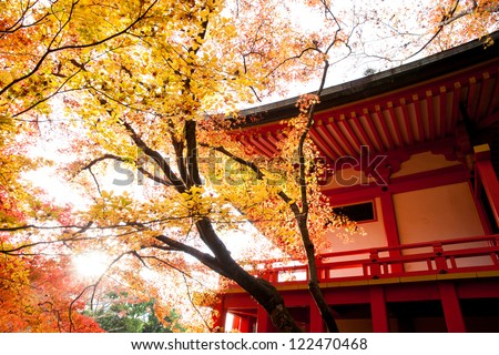 Red temple and Red maple trees in Kyoto (Japan) - stock photo