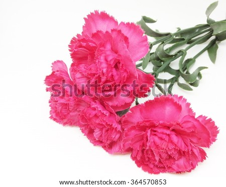 Red textile carnation on white background
