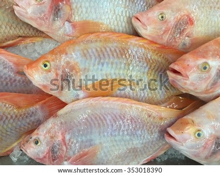 Red tilapia fish on ice stall