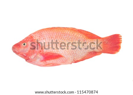 Red Tilapia Fish Ready For Cooking - stock photo