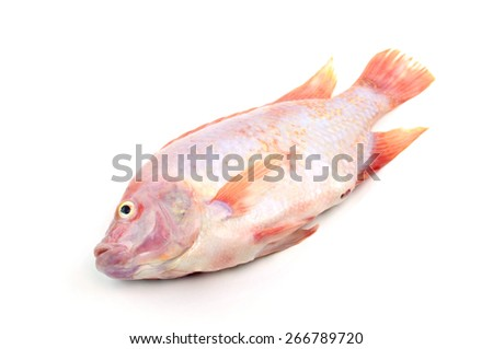Red tilapia isolated on white background - stock photo