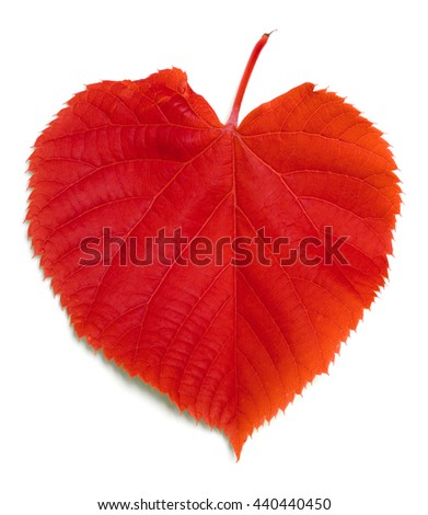 Red tilia leaf isolated on white background - stock photo