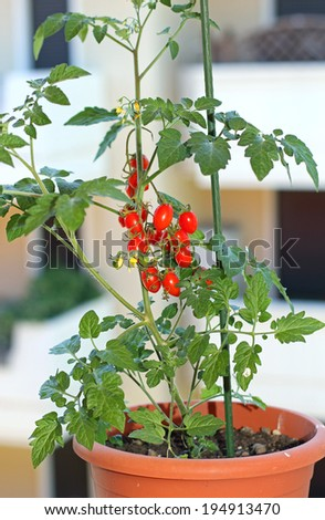 red tomato pot on the windowsill of the apartment building - stock photo