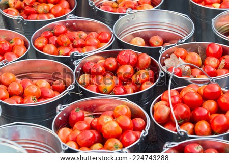 Red tomatoes in buckets