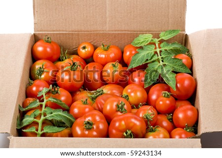 red tomatoes in cardboard box - stock photo