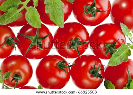 red tomatoes on white - stock photo