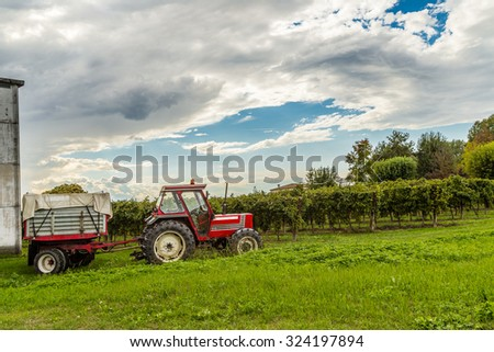 Red tractor pulling a load of white grapes during the harvest through the rows of vines
