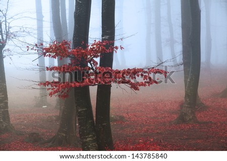 Red tree in the forest during an autumn foggy day - stock photo