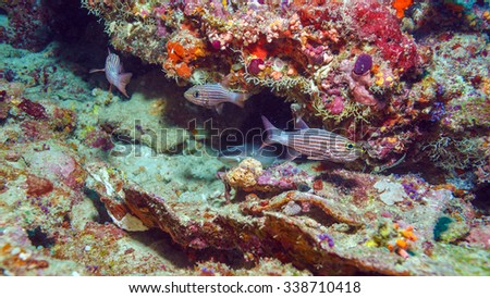 Red Tropical Fishes and Nurse Shark near Coral Reef, Maldives - stock photo
