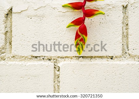 Red tropical heliconia flower or bird of paradise flower on cream wall background texture - stock photo