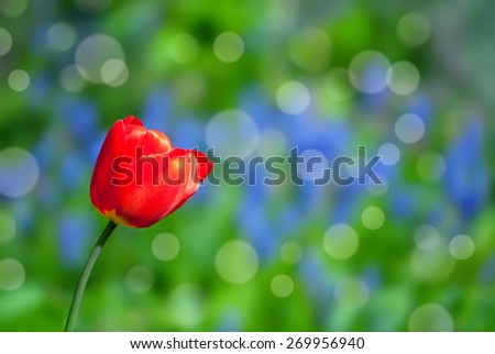 red tulip in a colorful garden - stock photo