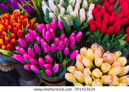 Red tulips. Beautiful bouquet of tulips. colorful tulips. tulips in spring, colorful tulip for woman and mother's day.