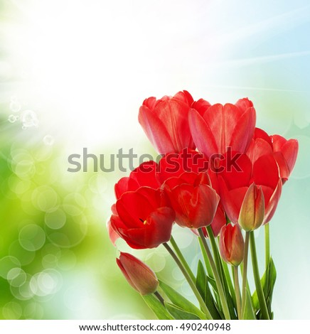 Red tulips.floral card design
