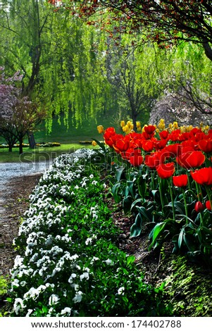 red tulips in a garden - stock photo