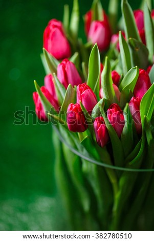 red tulips in a glass vase