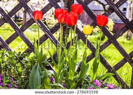 Red tulips in the garden by the wooden fence, floral backgrounds - stock photo