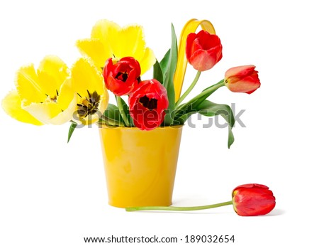 Red tulips in yellow flowerpot on white background - stock photo