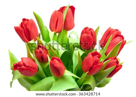 red tulips isolated on white - stock photo