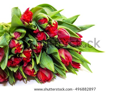 Red tulips on a white background, bouquet, flowers for a gift for Valentine's Day, Mother's Day or a gift for a girl