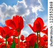 Red tulips on the background of sky. Abstract background. - stock photo