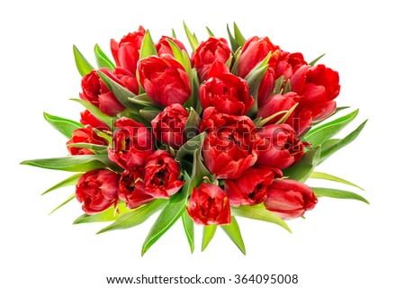 Red tulips. Spring flowers