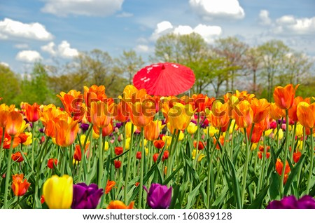 red umbrella in tulip field