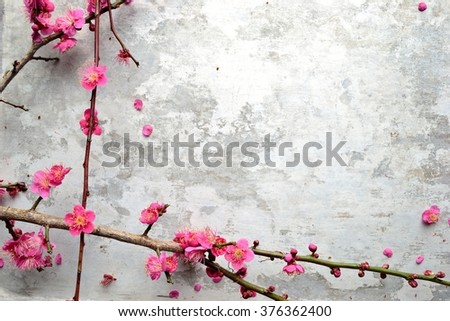 Red ume (Japanese apricot) blossoms on the silver background