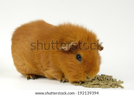 red US-Teddy, food pellets - stock photo